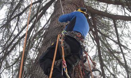 """Al via il progetto """"Occhio al parco: la didattica sull'albero"""" (FOTOGALLERY)"""