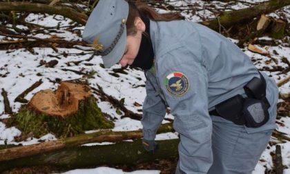 Bosco distrutto per rubare la legna