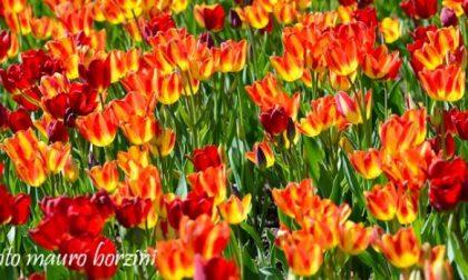 Coldiretti riapre a Nebbiuno il recapito per i floricoltori