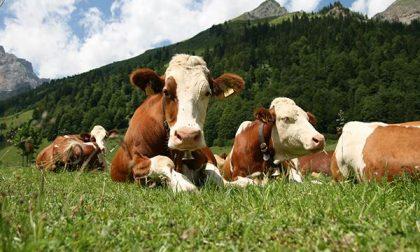 Latte, prezzi da stalla a scaffale + 317%