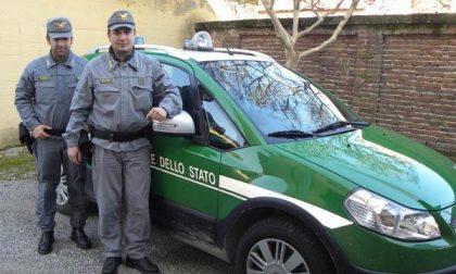 Operazione della Forestale: sequestrata un'area a S. Martino di Trecate
