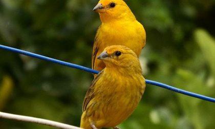 Torna a Pernate la Mostra ornitologica Apon