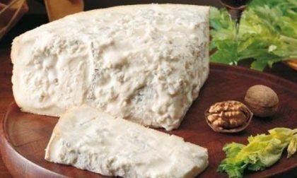 Gorgonzola: la produzione continua a crescere