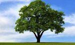 """Arona Domani propone: """"Piantiamo un albero per ogni nuovo nato"""""""