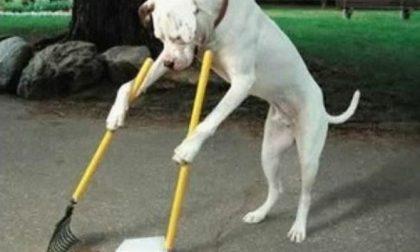A Paruzzaro saranno installati 5 nuovi cestini per le deiezioni canine
