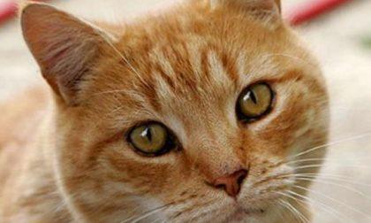 Gatti in cerca di casa, l'evento a Cressa