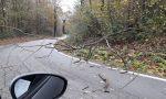Attenzione albero caduto a Divignano