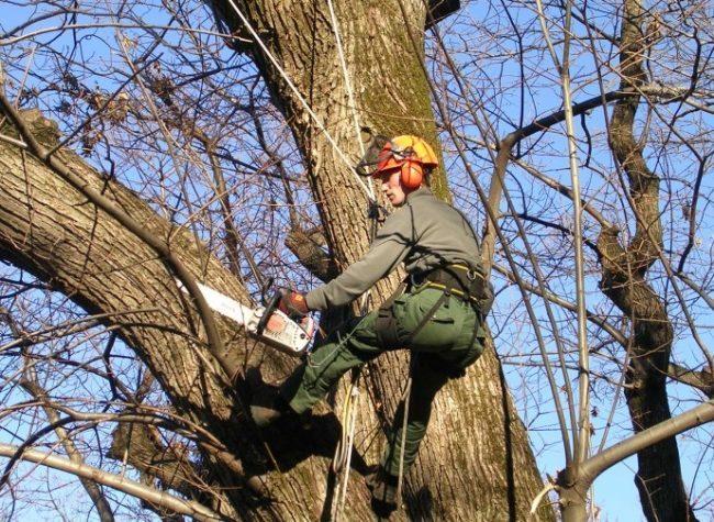 Programmati interventi sugli alberi a Novara