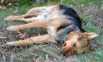 Cane ucciso: taglia di 5mila euro sui responsabili