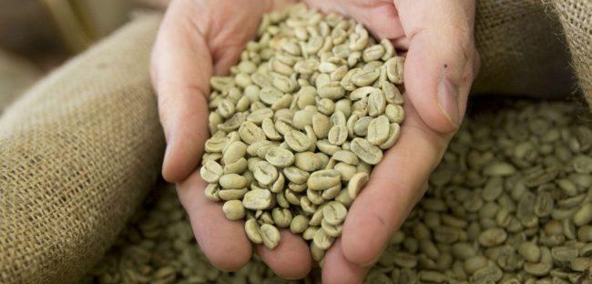 Caffè verde, bevanda dagli effetti benefici