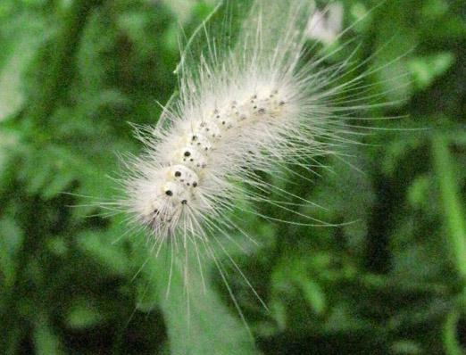 Finestre chiuse a trecate per il trattamento anti lepidottero novara oggi - Finestre condominiali aperte o chiuse ...