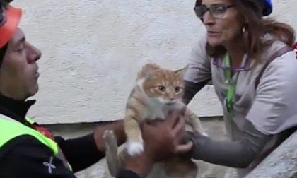 I Gatti del Borgo per i felini di Genova dopo il crollo del Morandi