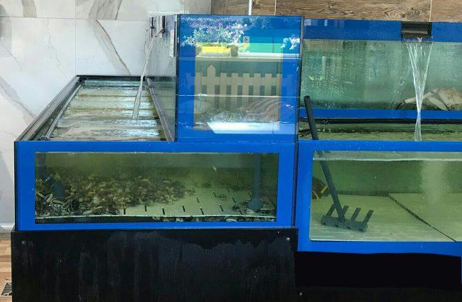 maxisequestro molluschi guardia costiera verbano