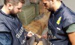 Falso Made in Italy: un sequestro che vale 500mila euro FOTO e VIDEO