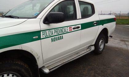 Controlli polizia provinciale Covid-19: fermate 487 persone, 28 sanzionate