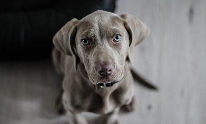 Raccolta alimentare per cani e gatti bisognosi nei punti vendita Novacoop