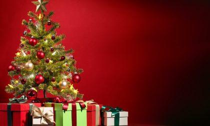 Gozzano: al via online il concorso per gli alberi di Natale più belli