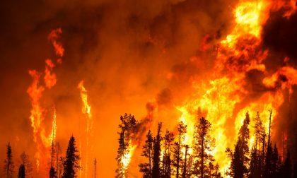 Incendi boschivi: stato di massima pericolosità