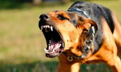 Bimbo di quattro anni azzannato al volto da un cane