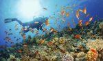 Torna da Cuba con i coralli in valigia, fermata a Caselle: rischia 15mila euro di multa
