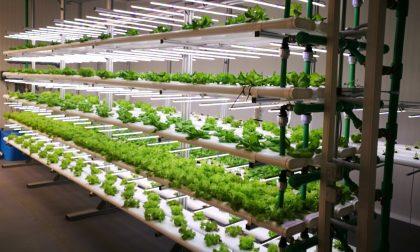 La serra che aiuta a sfamare il mondo è a Novara