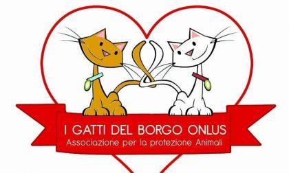Gattino ucciso a Gioia Tauro: i Gatti del Borgo presentano denuncia