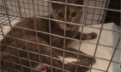 Killer di gatti usa trappole da bracconaggio in Lomellina