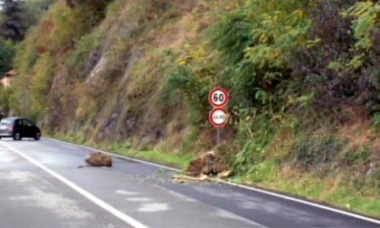 Frana sulla Statale 34 del Lago Maggiore: strada chiusa e percorsi consigliati
