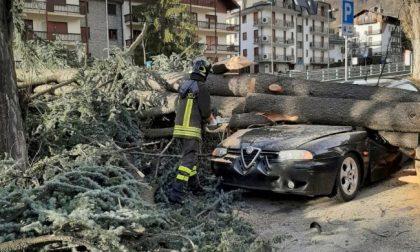 Tromba d'aria in Val di Susa, tetti scoperchiati e alberi abbattuti