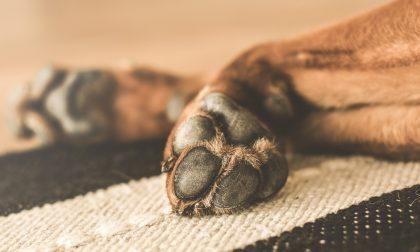 Cuccioli di cane stipati in un furgone proveniente dalla Serbia