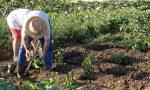 Cura dell'orto, via libera agli spostamenti anche fra regioni