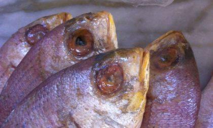 Novara via Manzoni: 28kg di pesce in pessime condizioni, multato esercizio etnico