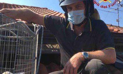 I vigili del fuoco di Borgomanero hanno salvato un gattino intrappolato FOTO