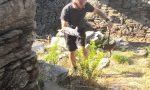 Vipere in Valle Intrasca: catturate e liberate lontano dai percorsi GALLERY