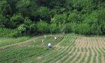 Puzza a Sizzano: stop ai fertilizzanti vicino alle abitazioni