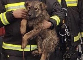 Cucciolo cade in un dirupo: vigili del fuoco si calano per 20 metri e lo salvano