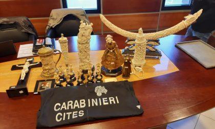 Novara vendita illecita di avorio: sequestrati 70 oggetti