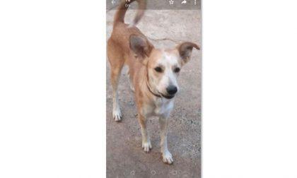 Da più di un mese si cerca una cagnolina smarrita a Veruno