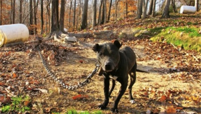 Cerano cucciolo abbandonato legato a una catena