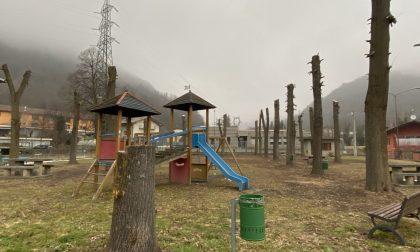 "Potature alberi: Legambiente dice no alle ""capitozzature"""