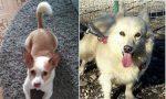 A Gattico e Cavaglietto da settimane (e mesi) si cercano due cagnolini smarriti