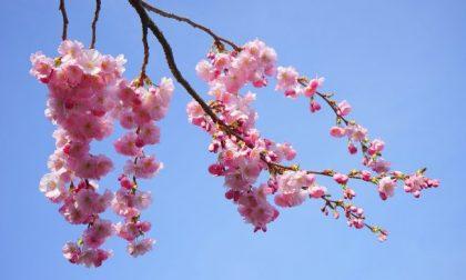 Assaggio di primavera in Piemonte, temperature in risalita fino a 20 gradi