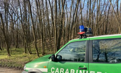 Ex Bemberg: sequestrate dai Carabinieri Forestale più di 100 tonnellate di legna tagliate illecitamente