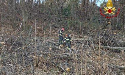 Nebbiuno uomo travolto dall'albero che stava tagliando: portato a Novara