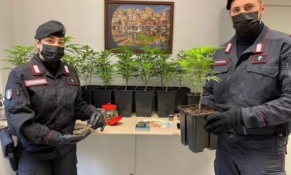Traffico internazionale di droga, lo stupefacente prodotto direttamente in casa