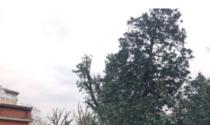 Maxi intervento della Provincia sugli alberi delle scuole di Novara
