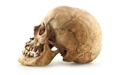 Teschio umano trovato in una zona boschiva di Oleggio Castello