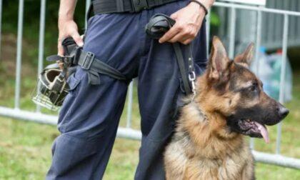 Blitz con i cani antidroga a Trecate: scovata cocaina, arrestato 57enne