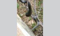 Insolito ospite nel giardino di casa: il video del serpente