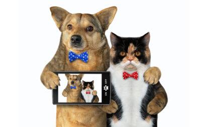 Fotografiamo i nostri amici animali!